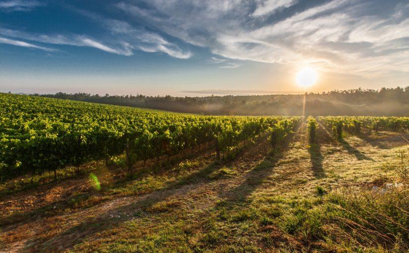 italiaanse witte wijn